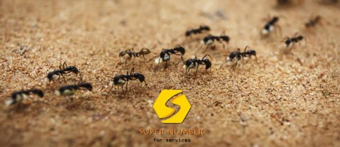 مكافحة النمل الابيض ابوظبي